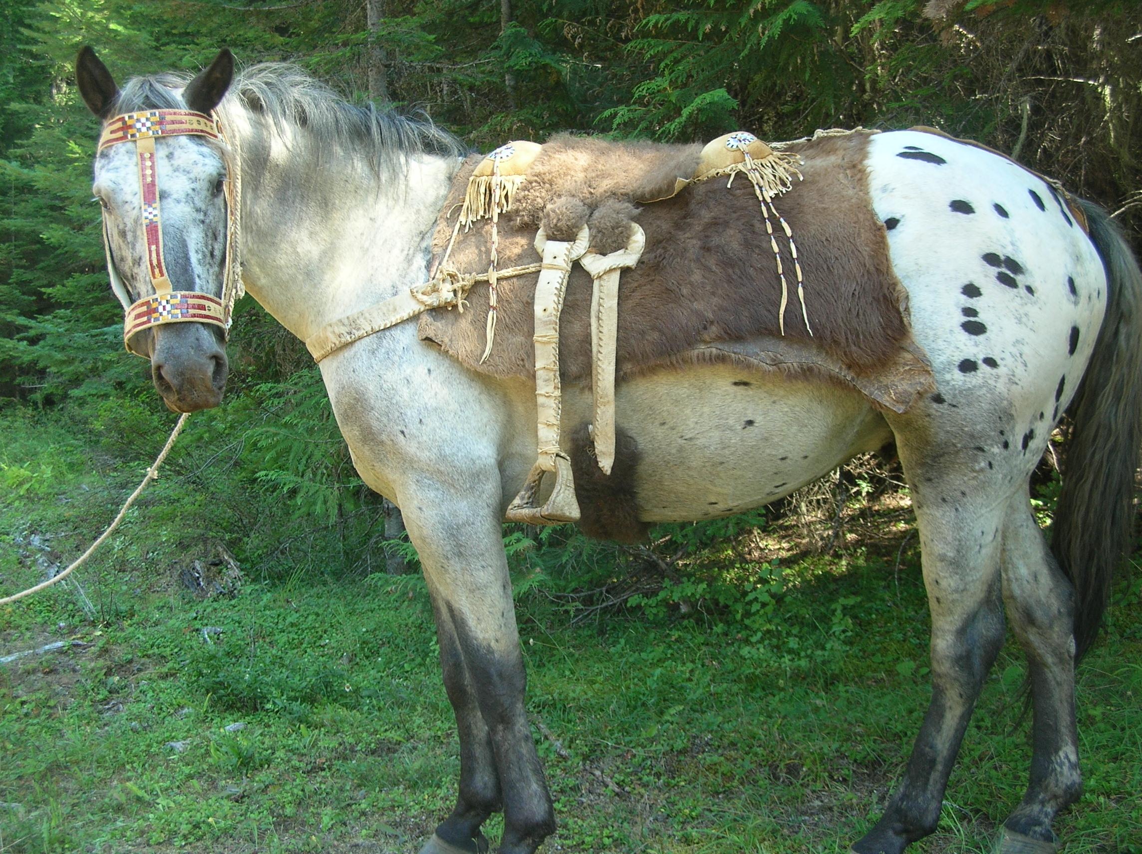 Primitive Horse Tack